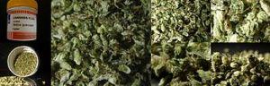 350px-Bedica,_medicinale_cannabis_flos_5_gram,_granulaat_